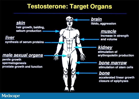 Measuring And Interpreting Serum Testosterone Levels In Men
