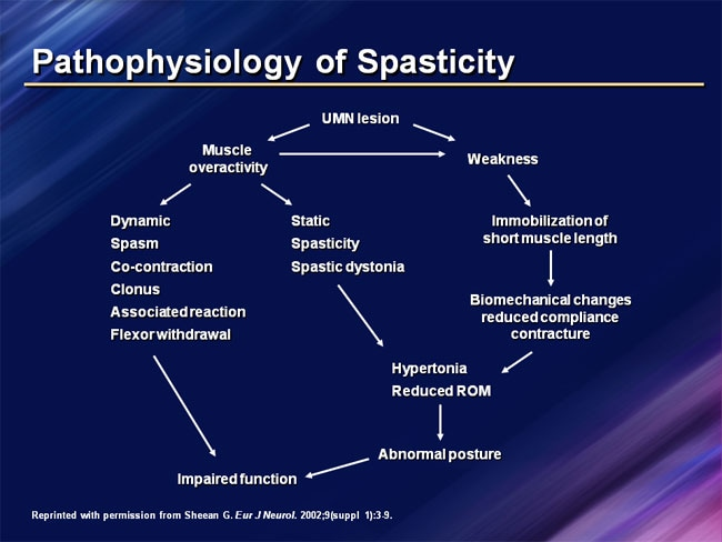 importance of early differential diagnosis of spasticity and, Skeleton