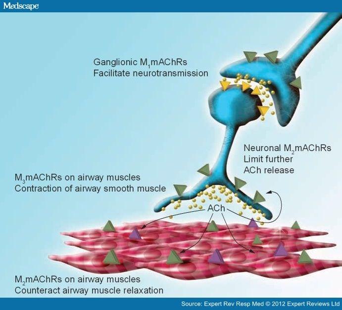 efficacy of anticholinergic drugs in asthma, Skeleton
