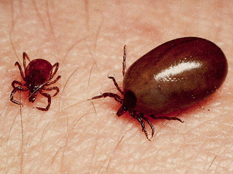 Cas cliniques quand les insectes se r galent qu est ce qui provoque ces d mangeaisons - Reconnaitre les insectes xylophages ...