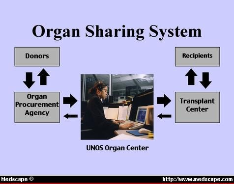 organ donation and placement essay Organ donation is the donation of biological tissue or an organ of the human body, from a living or dead person to a living recipient in need of a transplantation.