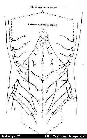 Inguinal Hernia: Anatomy and Management