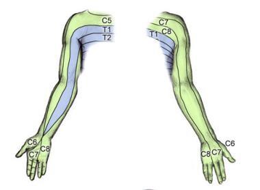 Dermatomes Shoulder