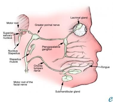 The facial nerve.