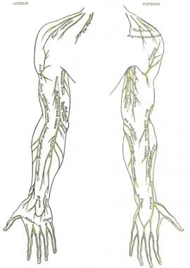 Cutaneous nerve distribution of upper extremity.
