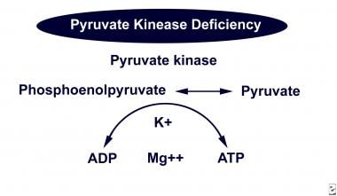 Pyruvate kinase in the Embden-Meyerhof pathway.