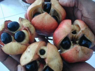Freshly picked Ackee fruit