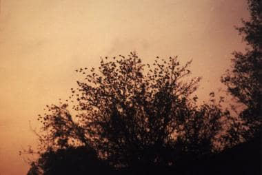 Starling roost in Alabama.