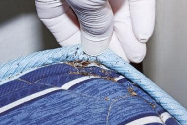 Fecal staining from bed bugs in the crevice of a m
