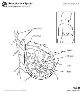 Female breast, anterior view.