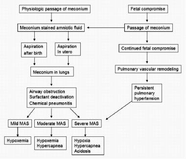 Pathophysiology of meconium aspiration. Image adap