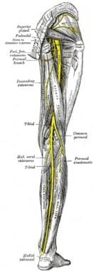 Sacral plexus, posterior view of lower extremity.