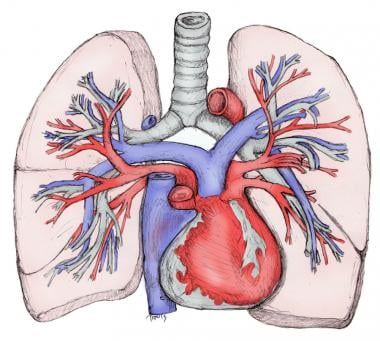 Segmental pulmonary artery anatomy
