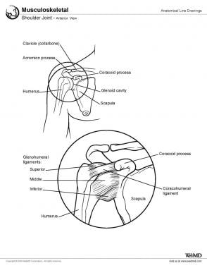 Shoulder joint, anterior view.