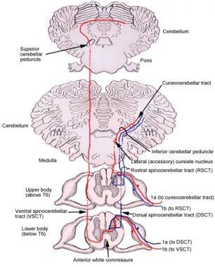 Somatosensory system.