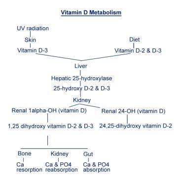 Vitamin D metabolism.
