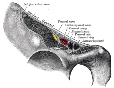 Location of femoral neurovascular structures and l