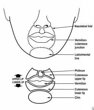 Cosmetic units of the lip.
