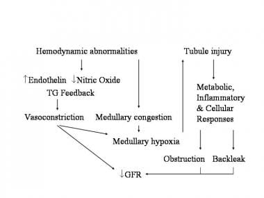 Mechanisms of intrinsic acute renal failure.