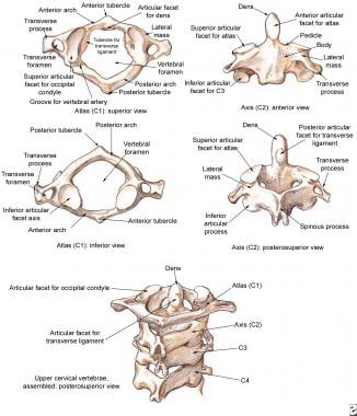 Cervical vertebrae, the atlas and the axis.