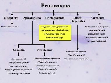 Taxonomy of some of the medically important protoz