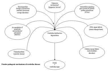 Putative pathogenic mechanisms of cerebellar disea