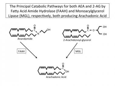 The principal catabolic pathways for both AEA and