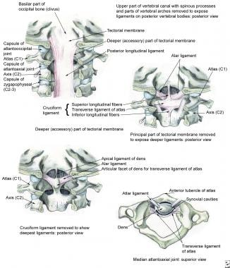 Internal craniocervical ligaments.