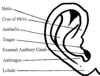 Anatomy of the external ear.