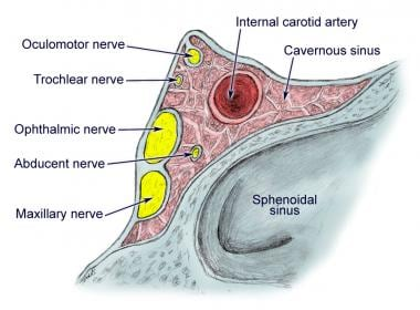 trigeminal nerve anatomy: gross anatomy, branches of the, Human Body