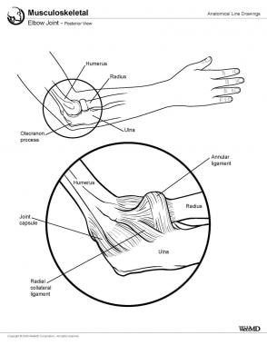 Elbow joint, posterior view.