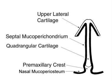 Normal coronal nasal anatomy.