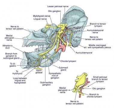 Diagram of the third branch (mandibular) of the tr