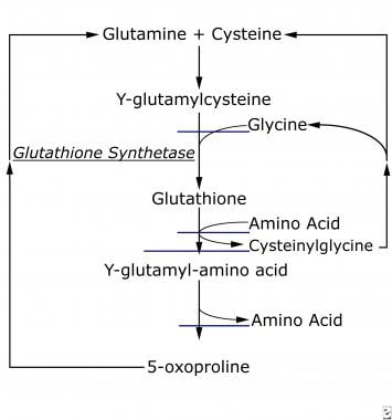 Biochemical pathway of glutathione synthetase.