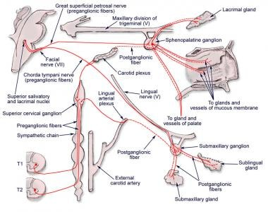 Sphenopalatine ganglion and its connections. Paras