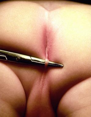 Anime shemale slave sex