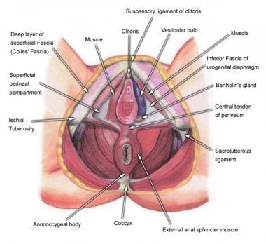 Deeper view of external structures.