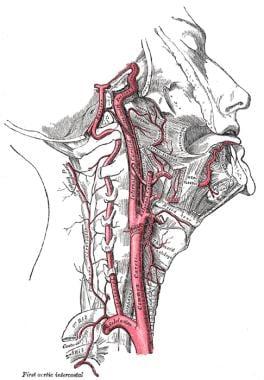 Anatomy of internal carotid and vertebral arteries