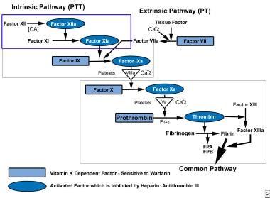 Coagulation pathway.