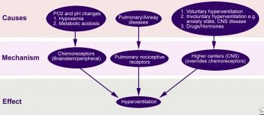 pediatric respiratory alkalosis: background, pathophysiology, Skeleton