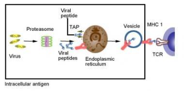 Major histocompatability complex class I antigen-p