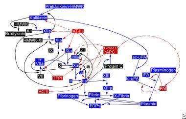 The hemostatic pathway. APC = activated protein C