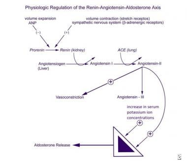 Physiologic regulation of the renin-angiotensin-al