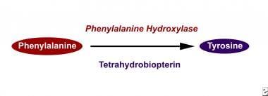 Phenylalanine hydroxylase converts phenylalanine t