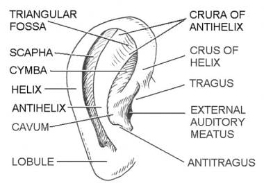 Subunits of the ear. Illustrated by Charles Norman