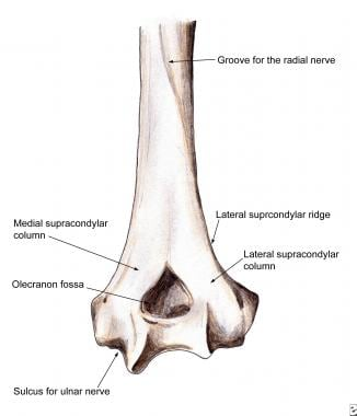 supracondylar humerus fractures: background, anatomy, etiology, Cephalic Vein