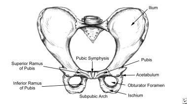 Pelvis, frontal view.