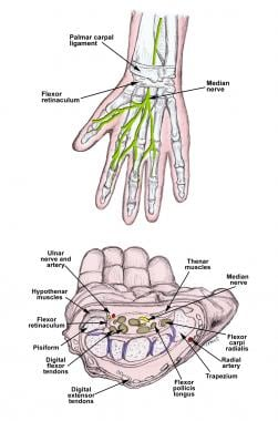 Anatomy of the median nerve and the carpal tunnel.