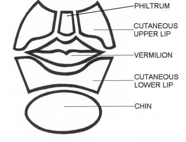 Subunits of the lower part of the face. Illustrate