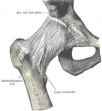 Hip ligaments.